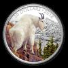 La chèvre de montagne