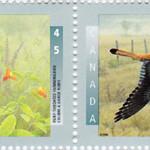 Oiseaux 1996