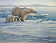 «Printemps arctique-ours blancs» *