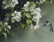 «Fleurs de pommier & colibri»*