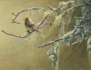 «Paruline à couronne rousse»