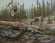«Sur les plateaux-Caribous» *